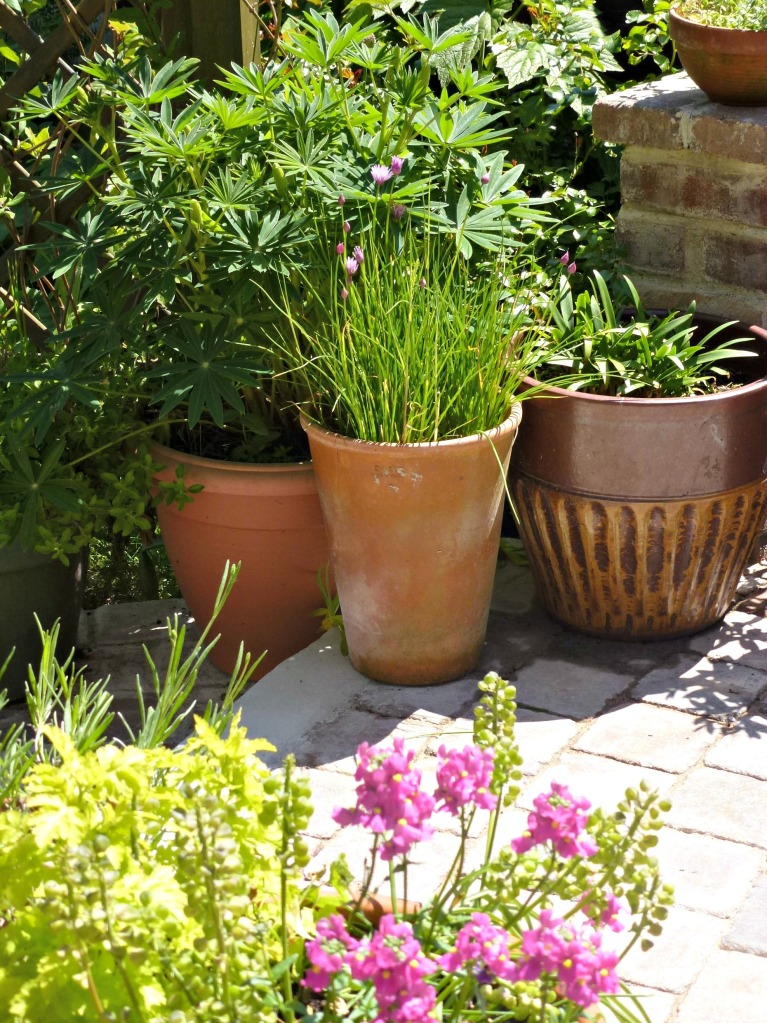 pot plants for the patio