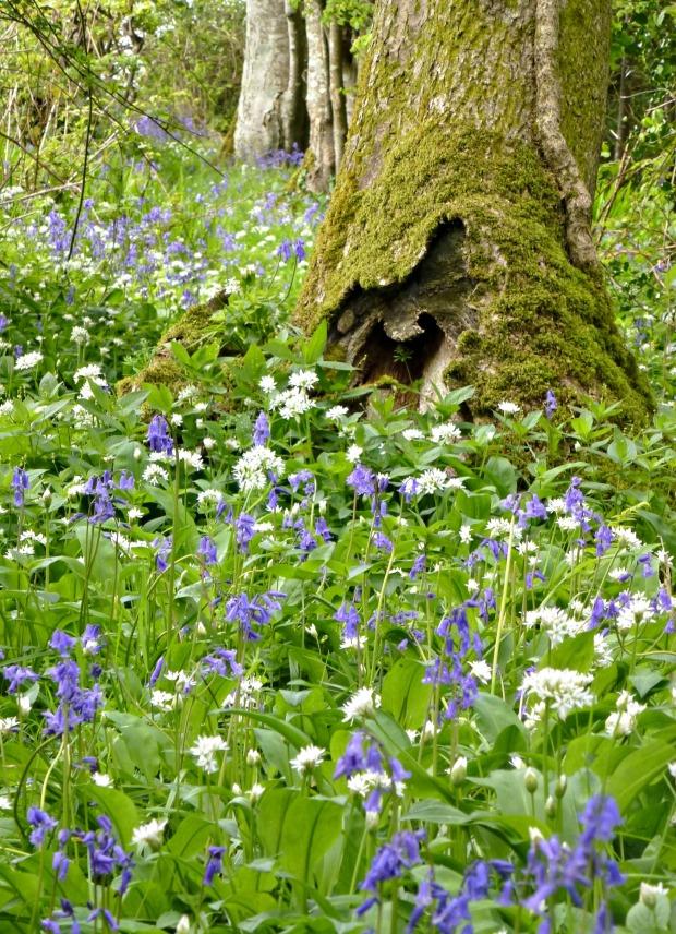 spring at dorset