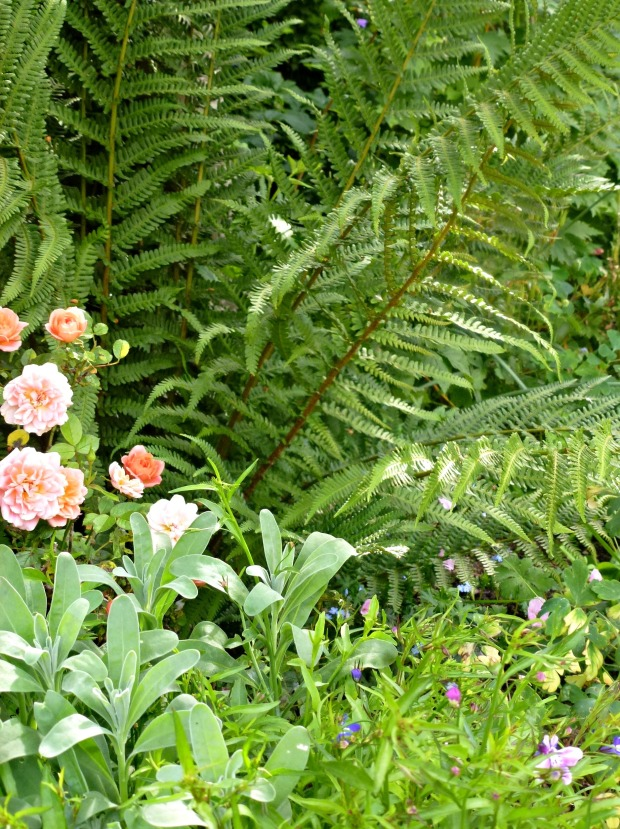 peach roses and fern