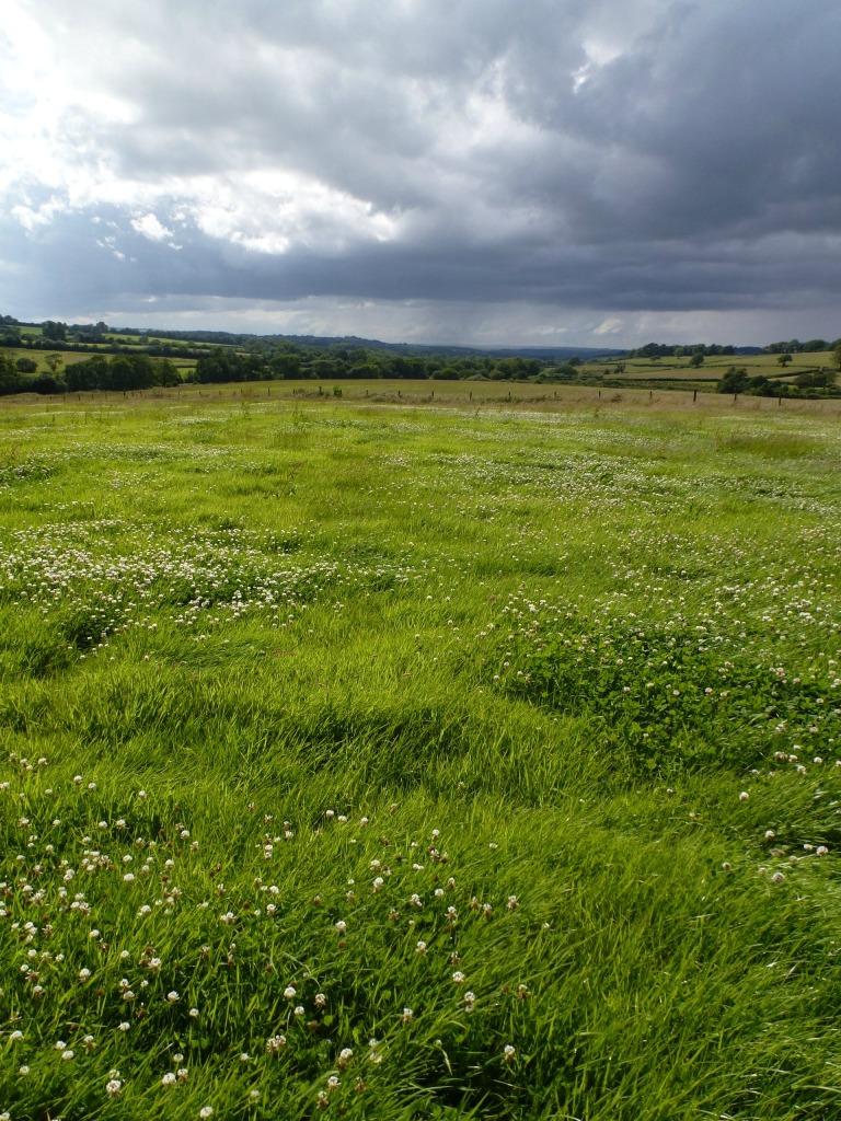 dorset countryside