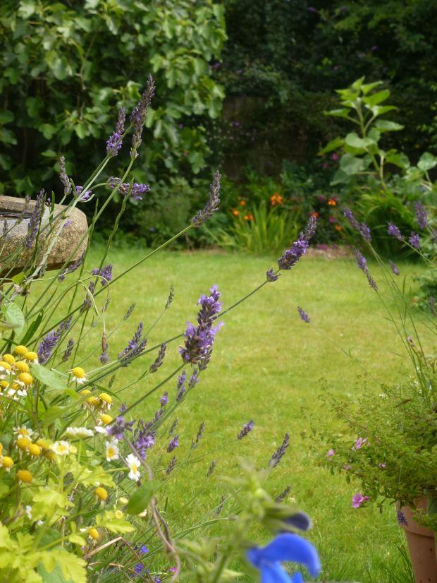 Garden after the rain.