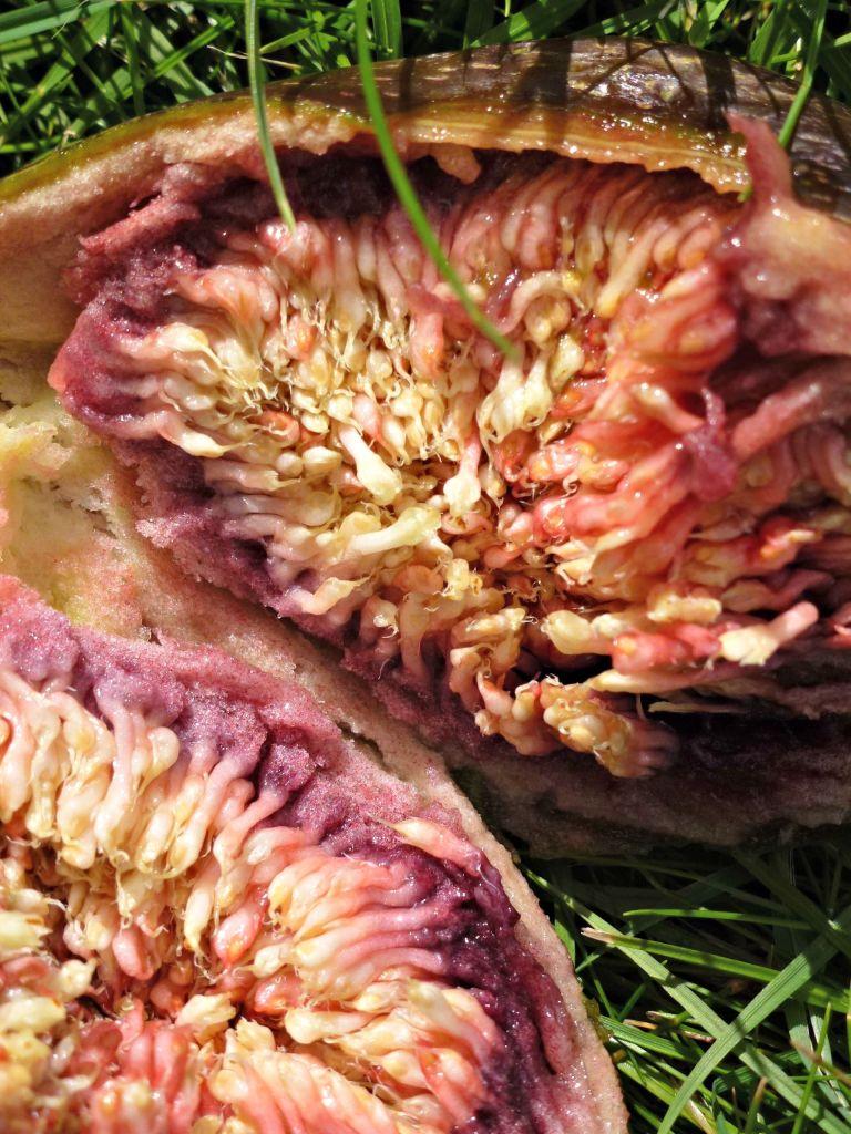 Inside a fig