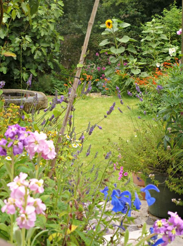 summer colours in the garden.