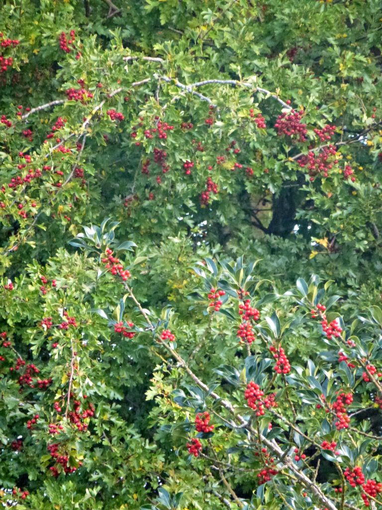 Autumn berries.
