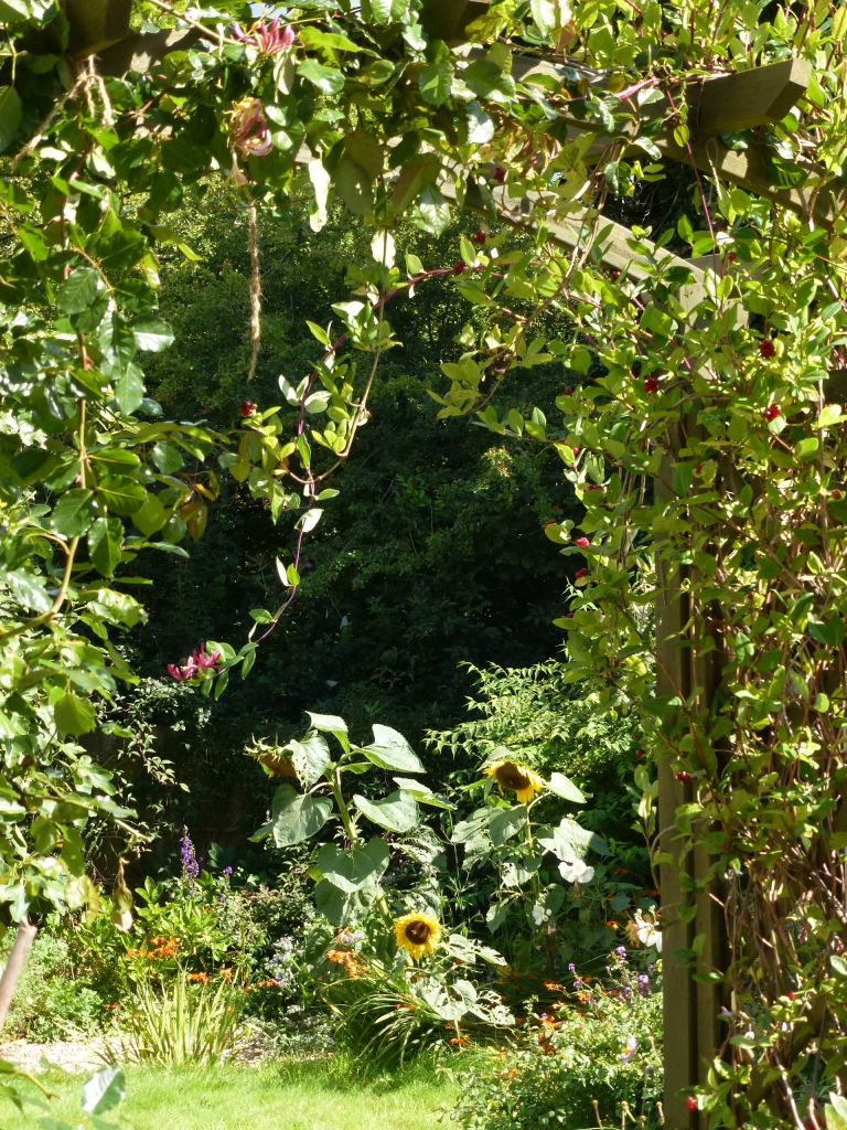garden in late summer