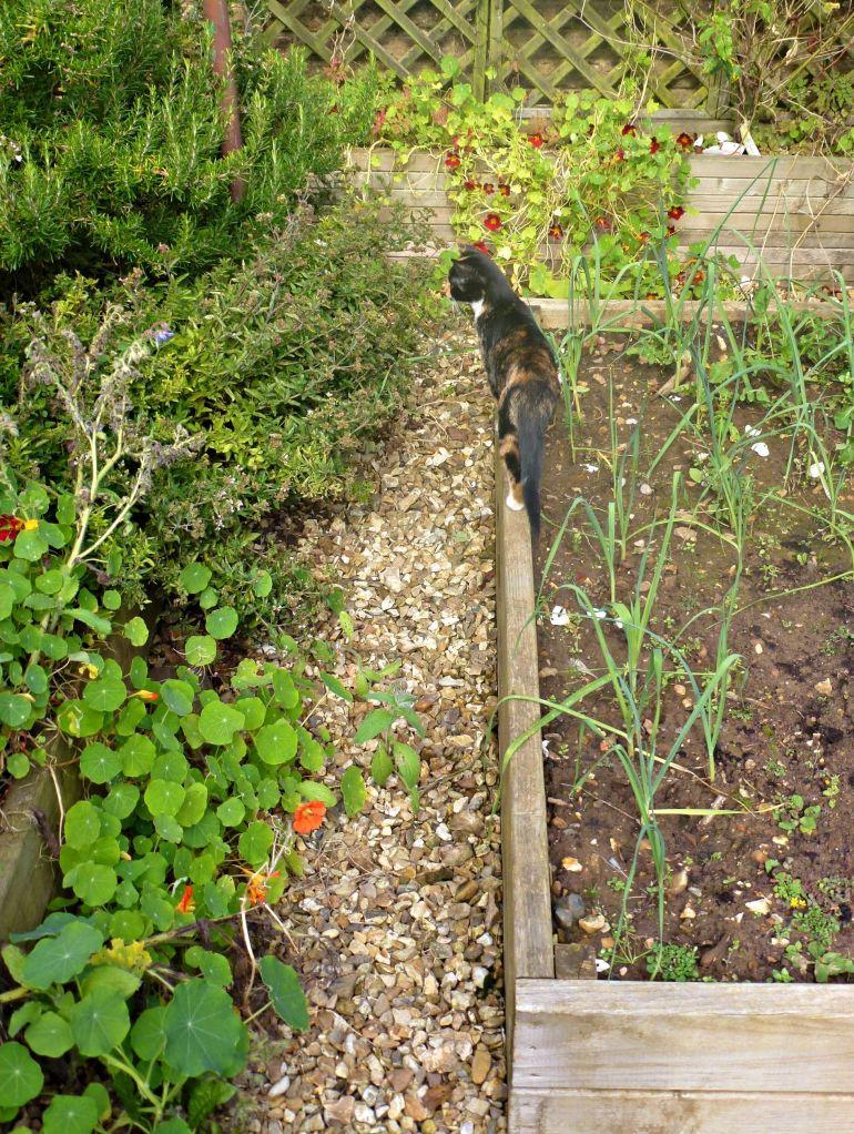 Marcy exploring her new garden
