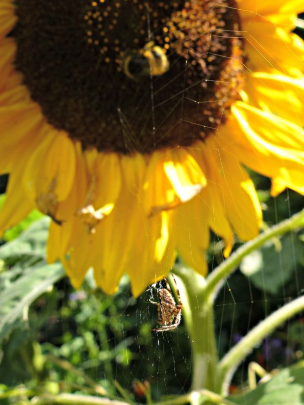 spider and bee