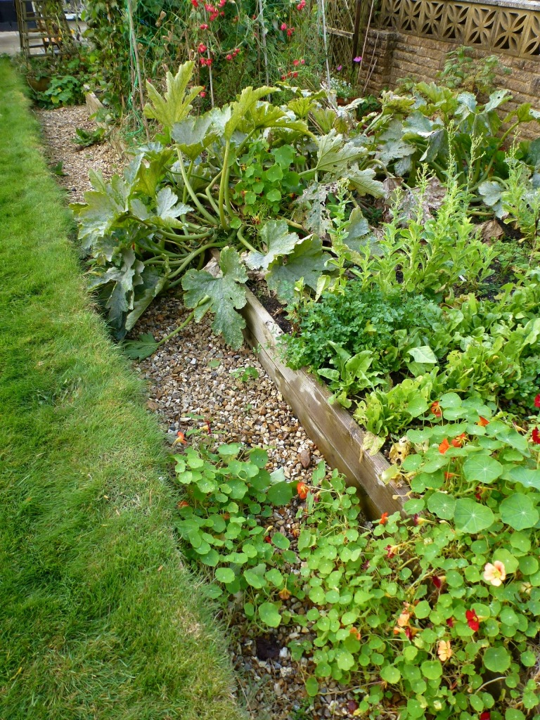 veg patch in the autumn