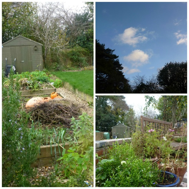 Another november garden Collage