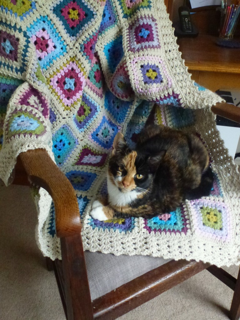 cat on the blanket