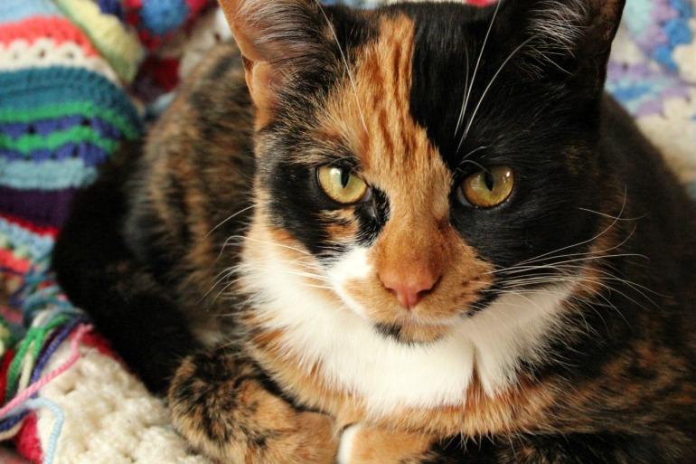 Marceline the tortoiseshell cat.