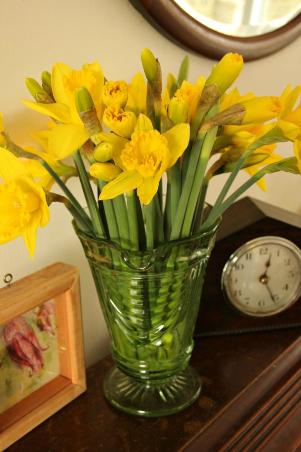 playing with my camera- daffs