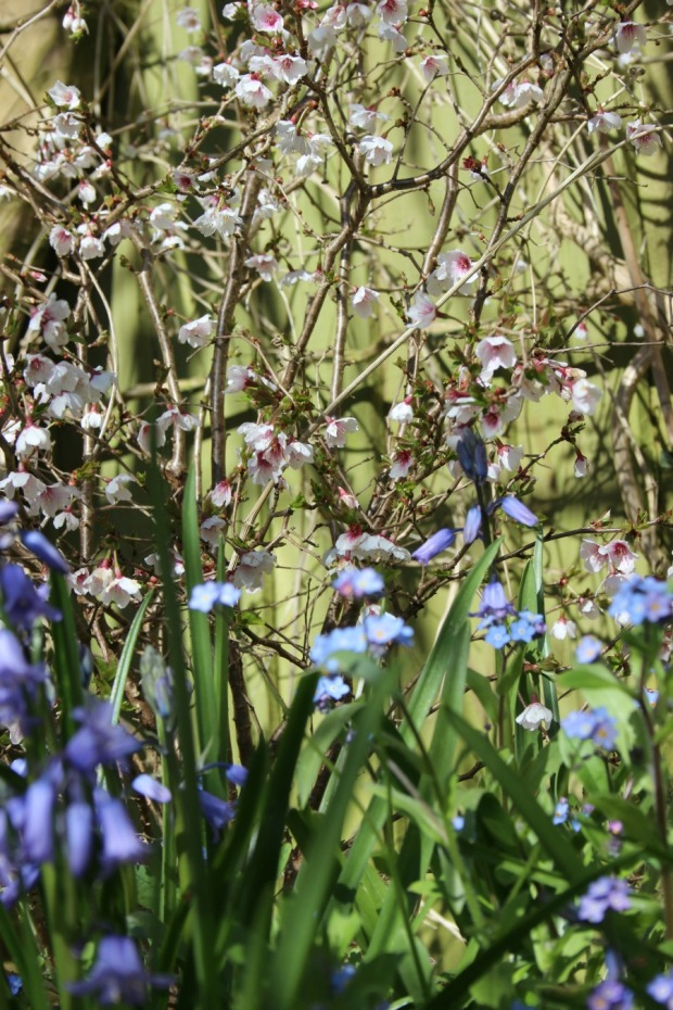 blurry spring pics