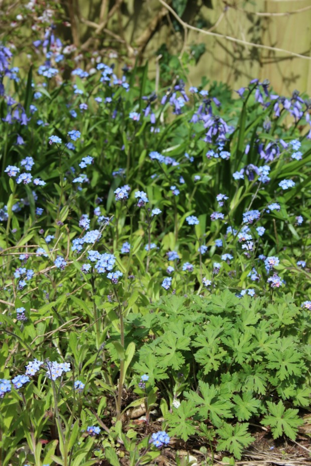 Forget me nots with the promise of Roxanne
