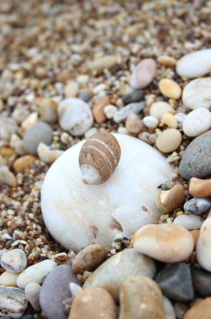 Hedgehog pebble