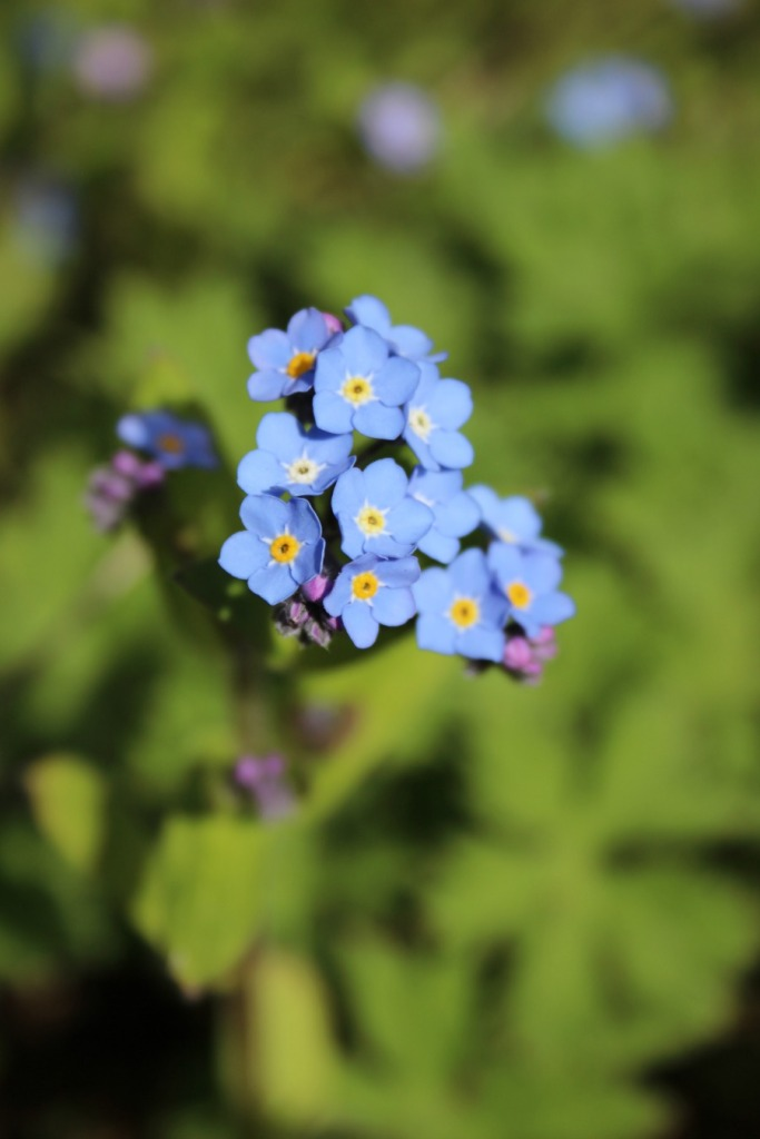 I love forget me nots.