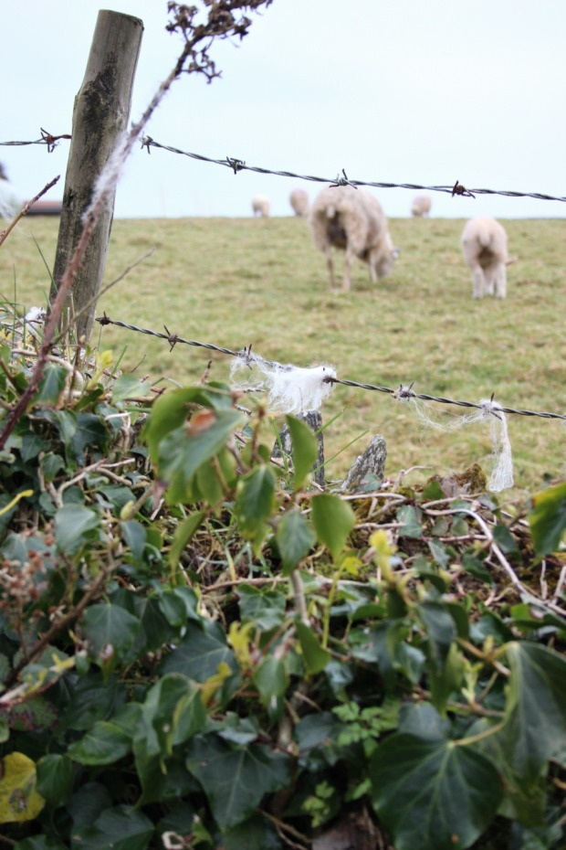 woolly bits and their sheep