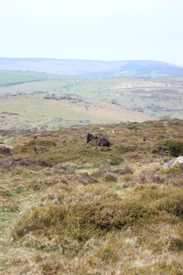 Hazy hot Dartmoor day