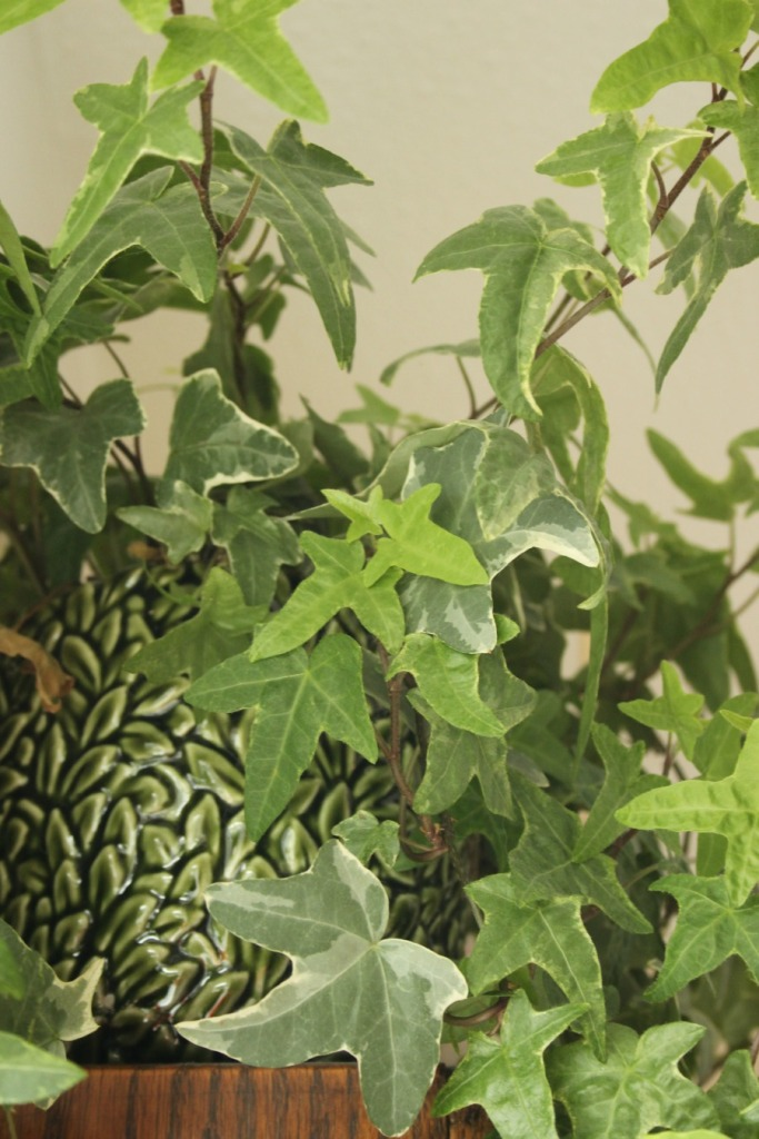ivy with sylvac plant holder