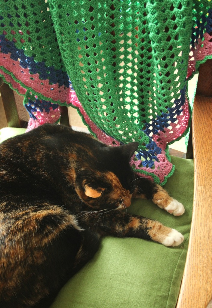 puss n shawl