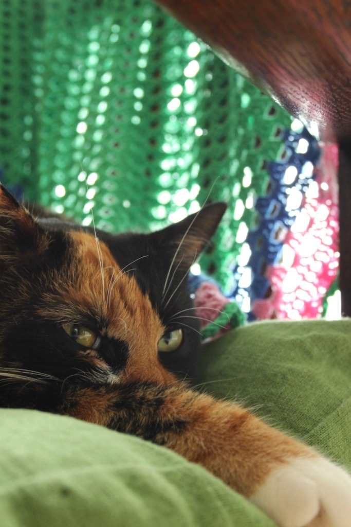 woke the cat up