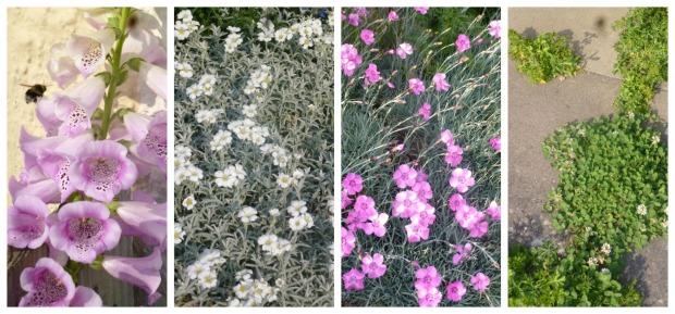 Front garden gubbins