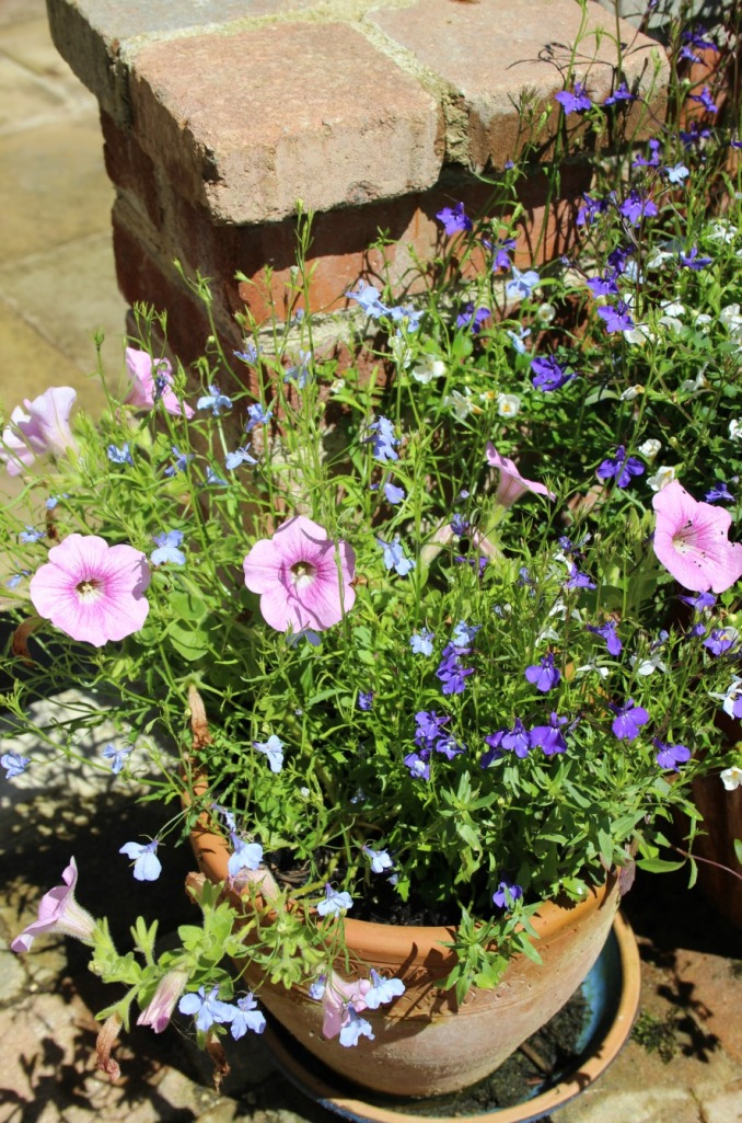 pots of flowers.