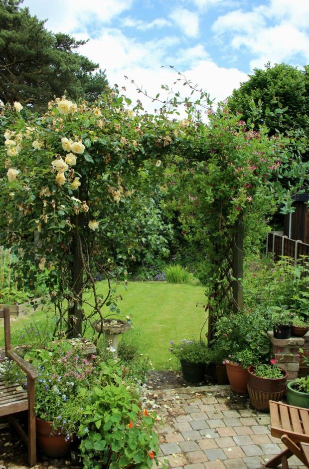 rain swamped rose