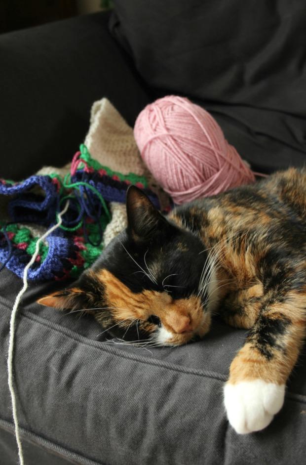 cat-crochet