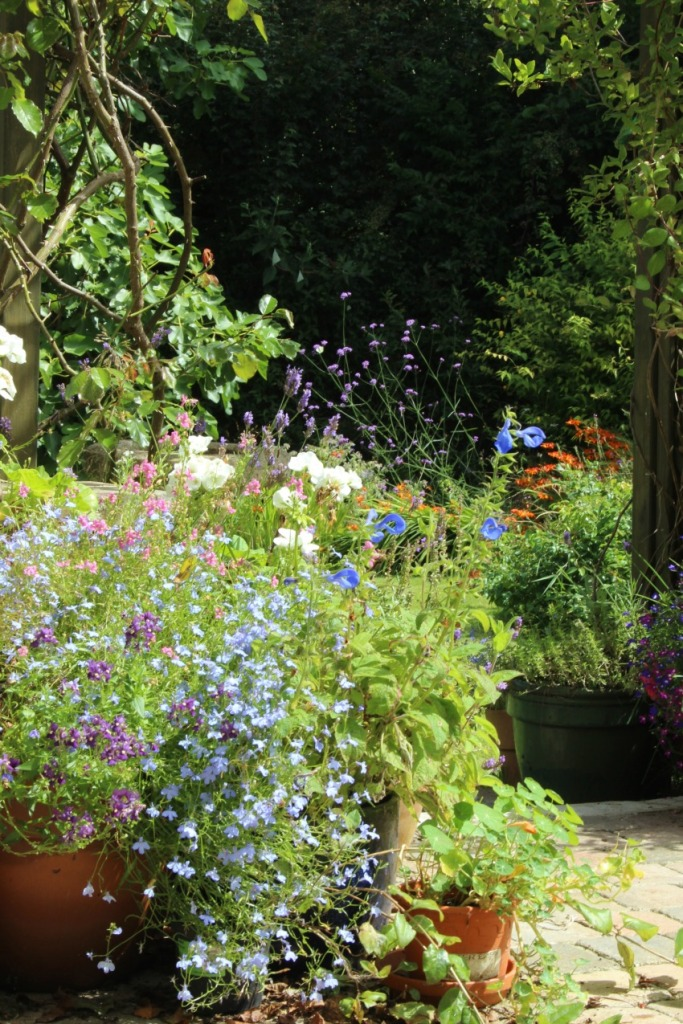 end-of-summer-in-the-garden