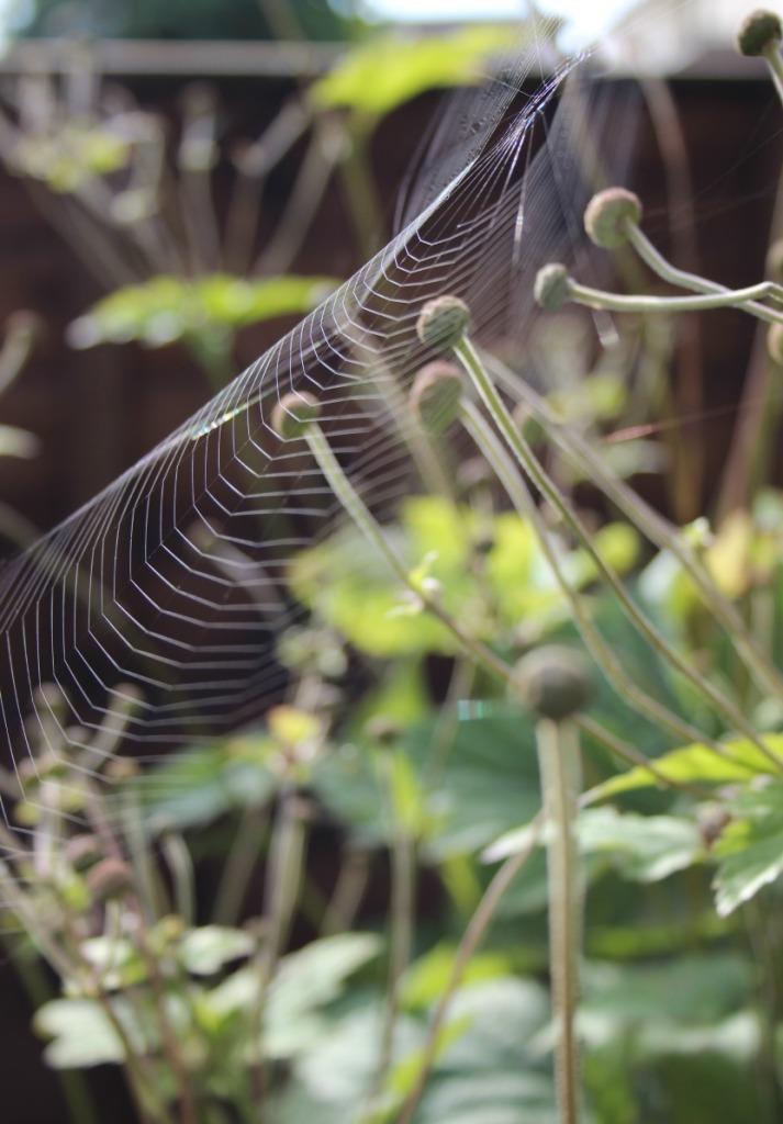 spider-webs