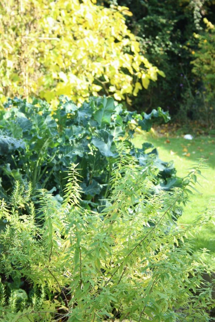 autumn-garden-stuff