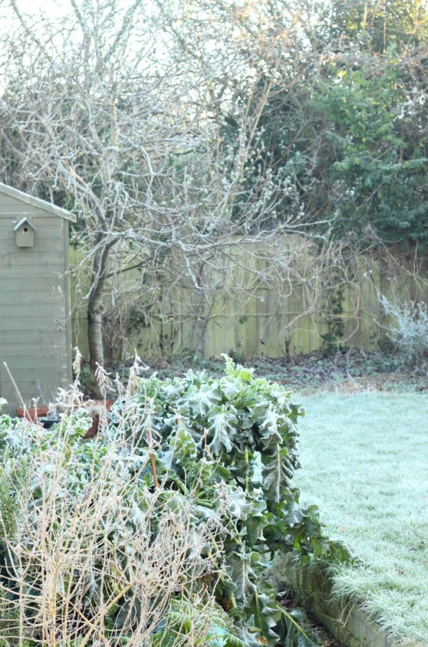 january-garden