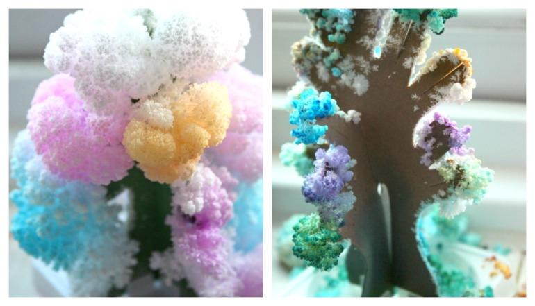 magic-trees